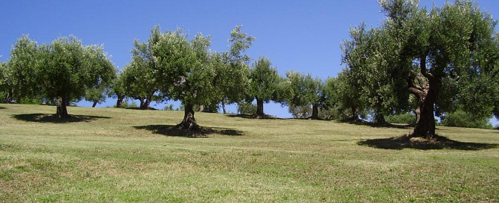 Rologis estate